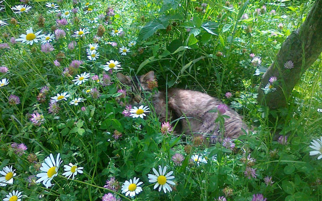 Na travnike moramo vrniti travniško cvetje
